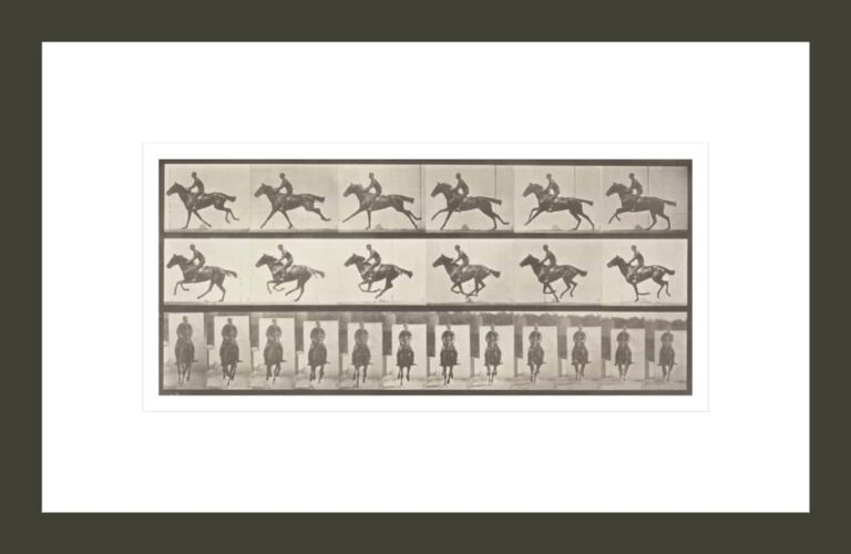 Horse Bouquet galloping, saddled with rider (Animal Locomotion, 1887, plate 631)