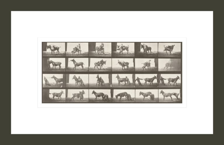 Horse Denver, refractory with trainer (Animal Locomotion, 1887, plate 662)
