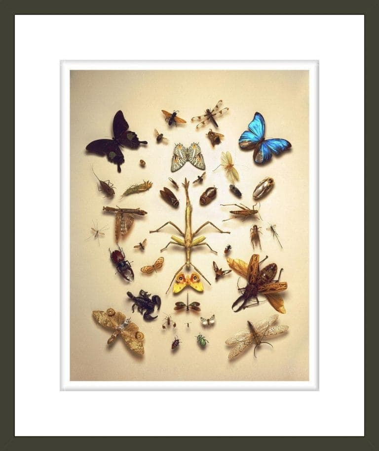 Collection of Insects from the Department of Entomology