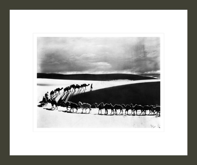 Camel caravan from the Museum's Third Central Asiatic expedition crosses the dunes near Boon Tsagaan Nuur, Mongolia, in search of water, 1925
