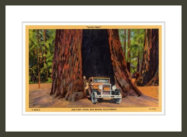 Car Passing Through Base of Giant Tree
