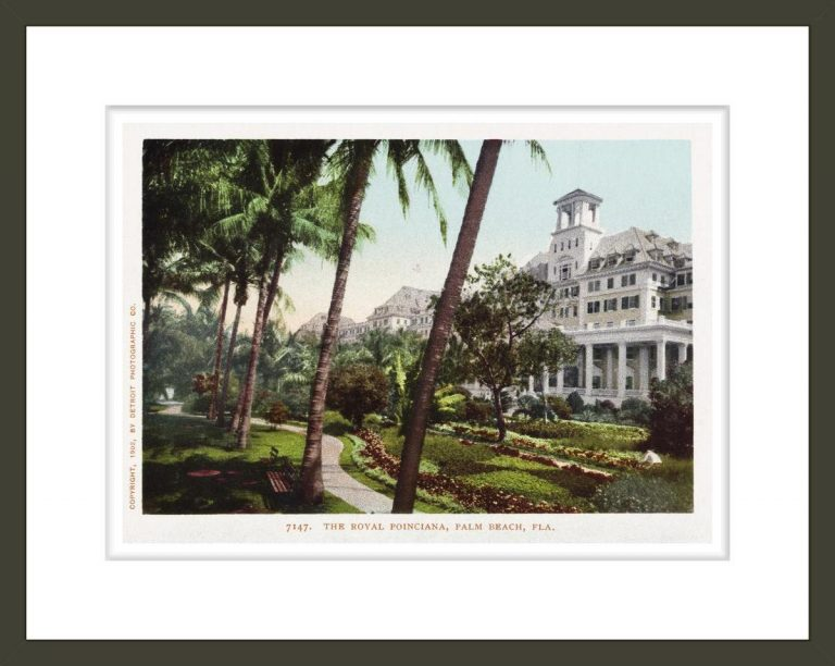 The Royal Poinciana Postcard