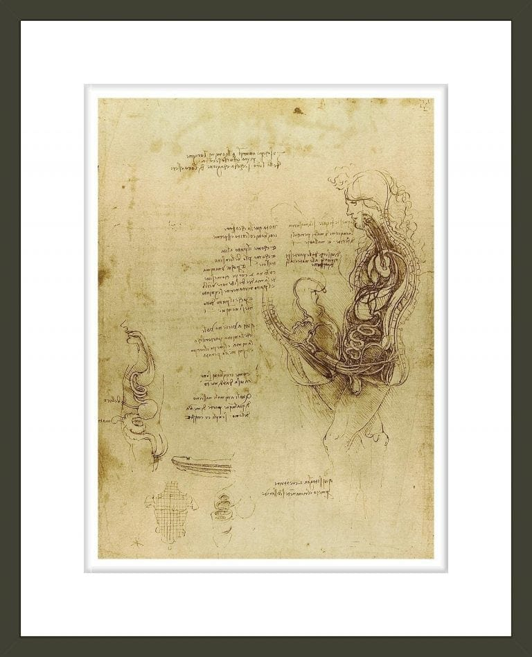 Study of coition of a hemisected man and woman
