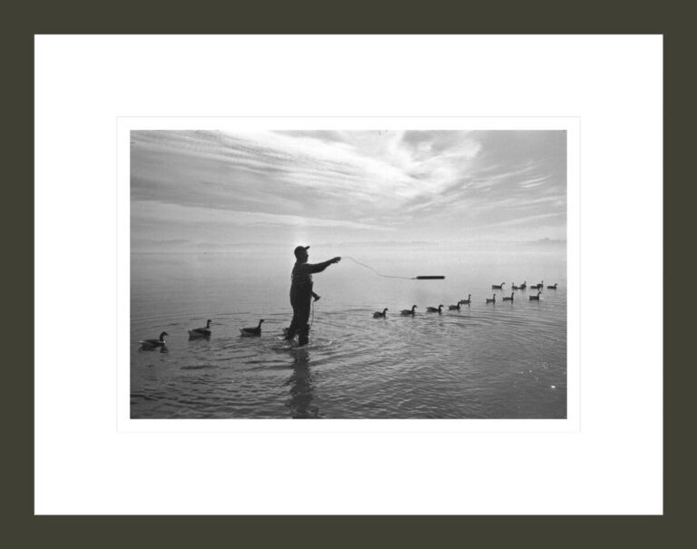 Duck hunter standing in water, setting out duck decoys, California, 1959