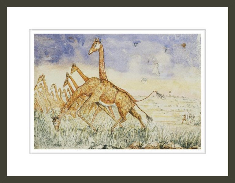 The first rush of the giraffes