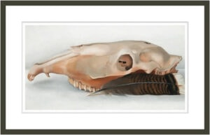 Horizontal Horse's or Mule's Skull with Feather