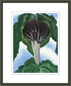 Jack-in-the-Pulpit No. 3
